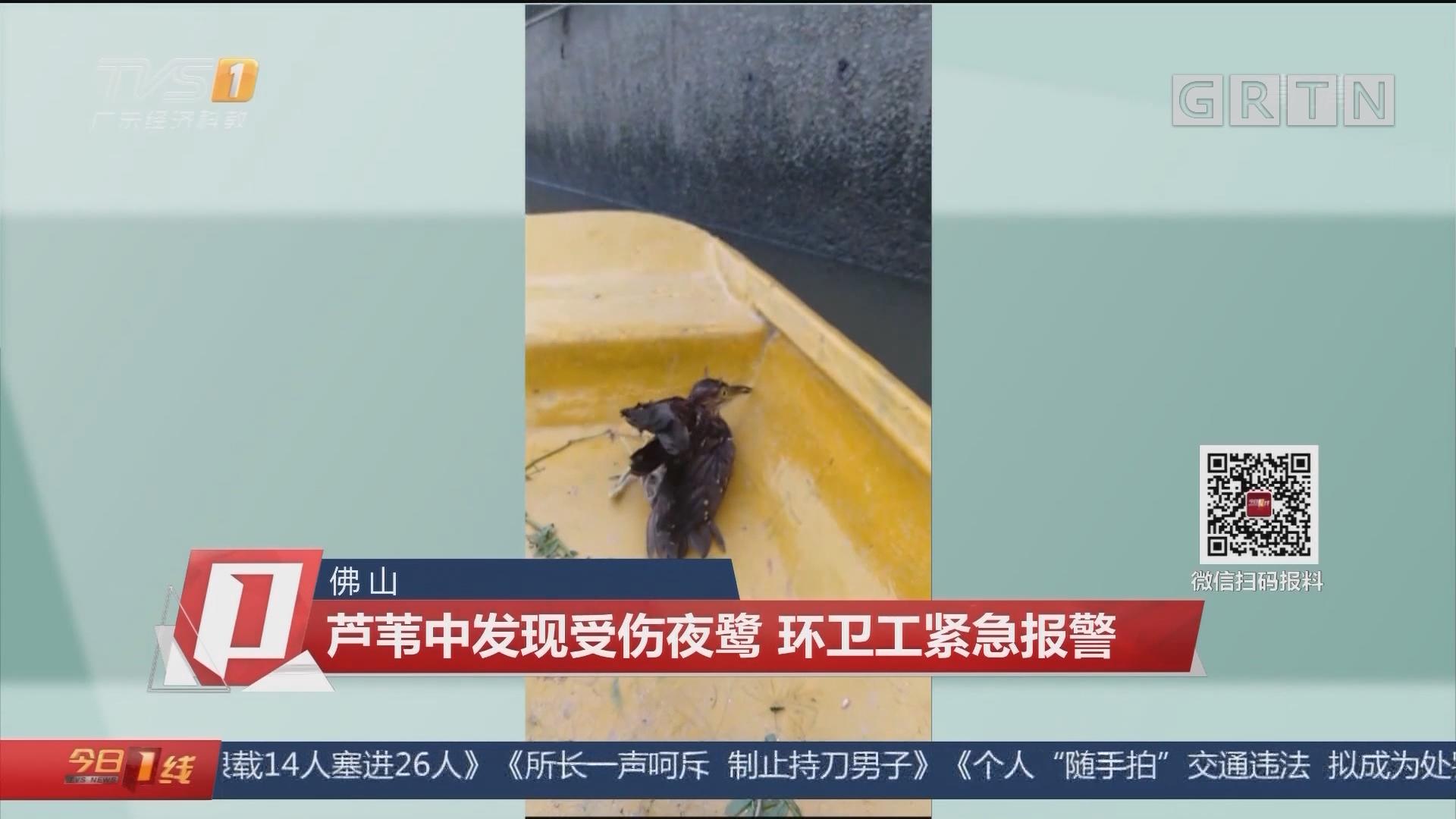 佛山:芦苇中发现受伤夜鹭 环卫工紧急报警