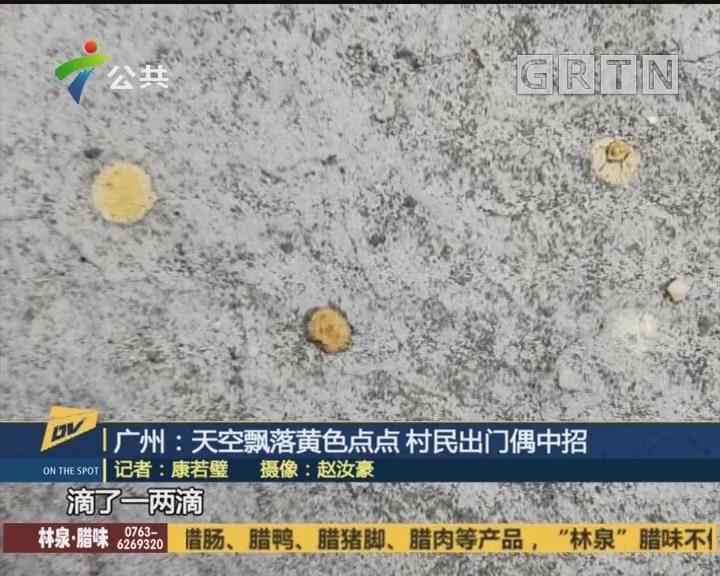 (DV现场)广州:天空飘落黄色点点 村民出门偶中招
