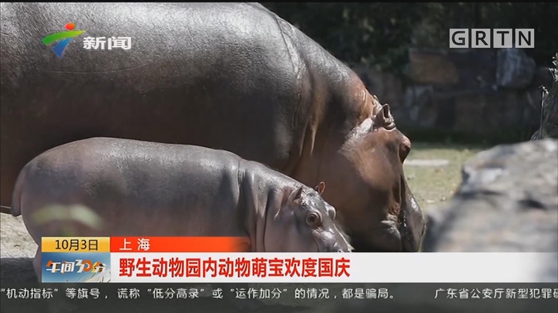 上海:野生动物园内动物萌宝欢度国庆