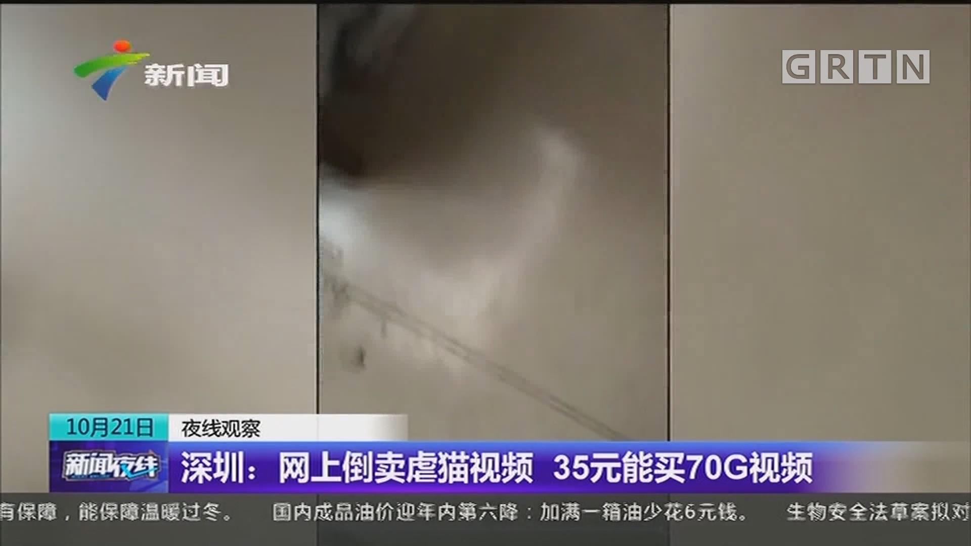 深圳:网上倒卖虐猫视频 35元能买70G视频