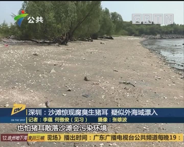 (DV現場)深圳:沙灘驚現腐臭生豬耳 疑似外海域漂入