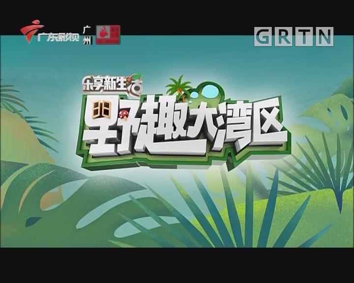 [2019-10-03]乐享新生活-野趣大湾区:国庆特别策划