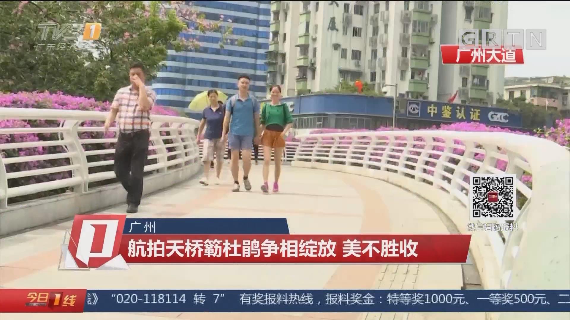 广州:航拍天桥簕杜鹃争相绽放 美不胜收