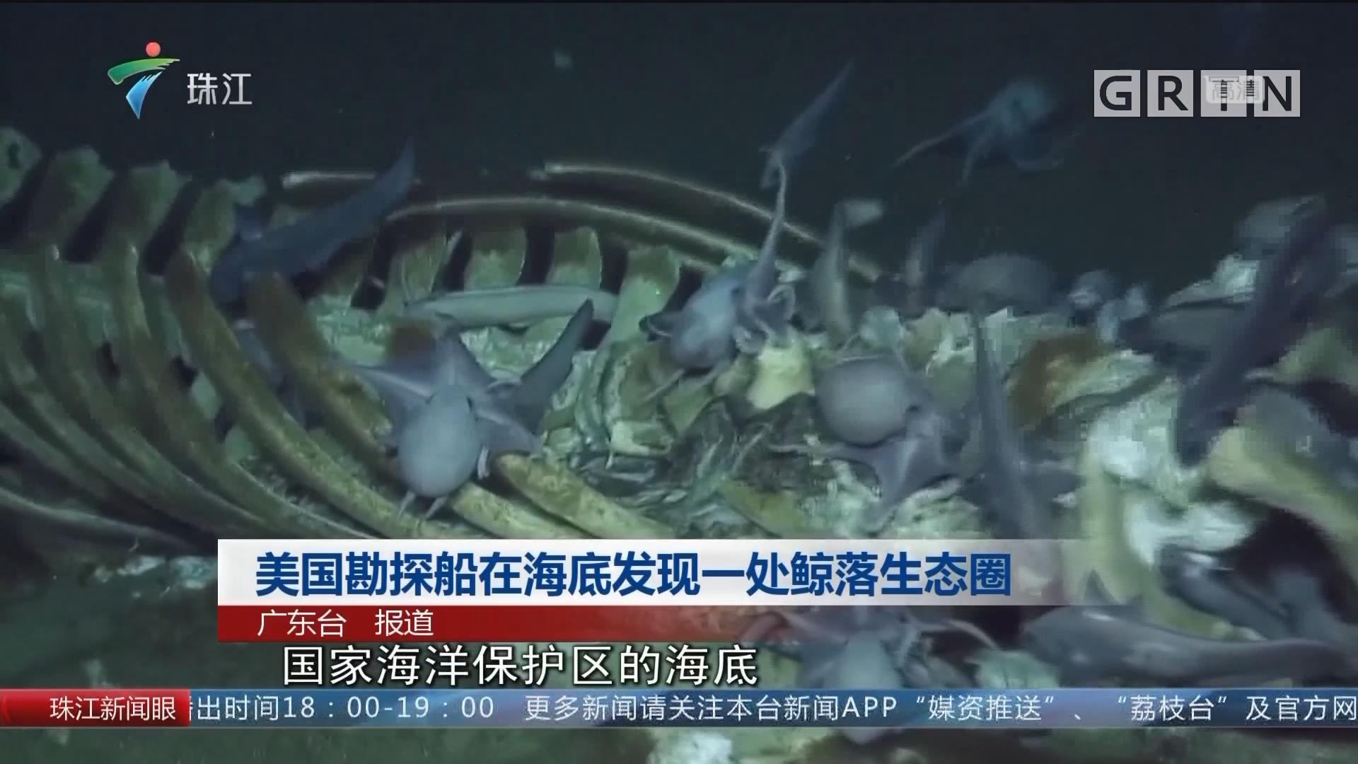 美国勘探船在海底发现一处鲸落生态圈