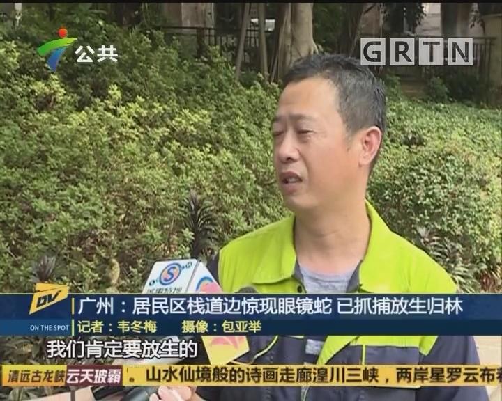 (DV現場)廣州:居民區棧道邊驚現眼鏡蛇 已抓捕放生歸林