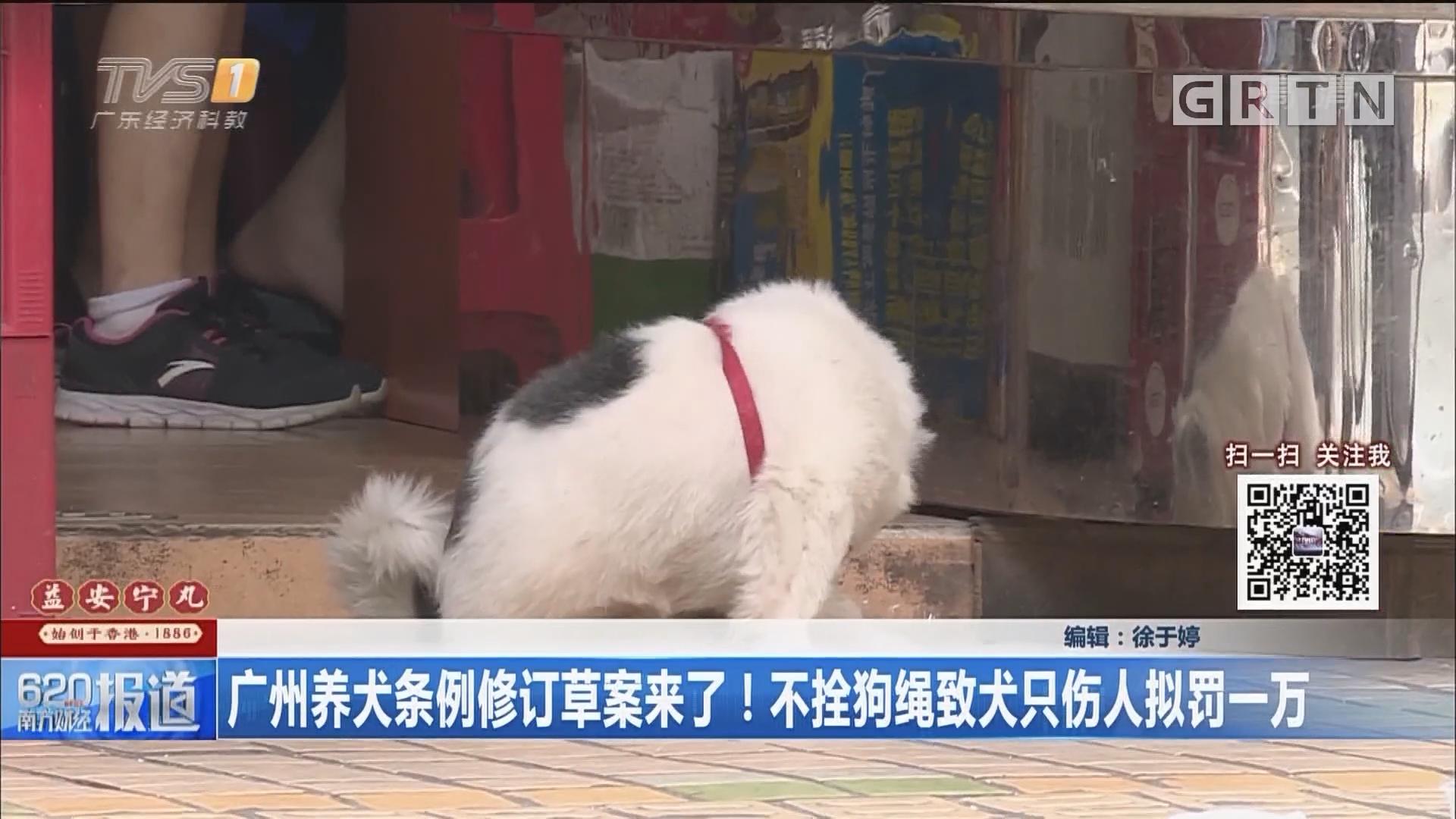 广州养犬条例修订草案来了!不拴狗绳致犬只伤人拟罚一万