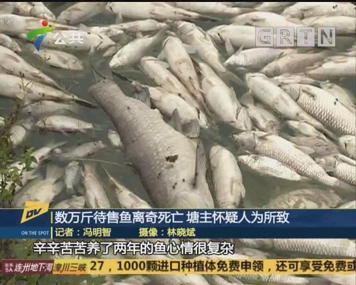 (DV现场)数万斤待售鱼离奇死亡 塘主怀疑人为所致
