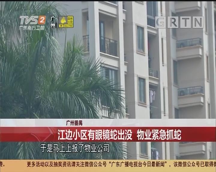 广州番禺 江边小区有眼镜蛇出没 物业紧急抓蛇