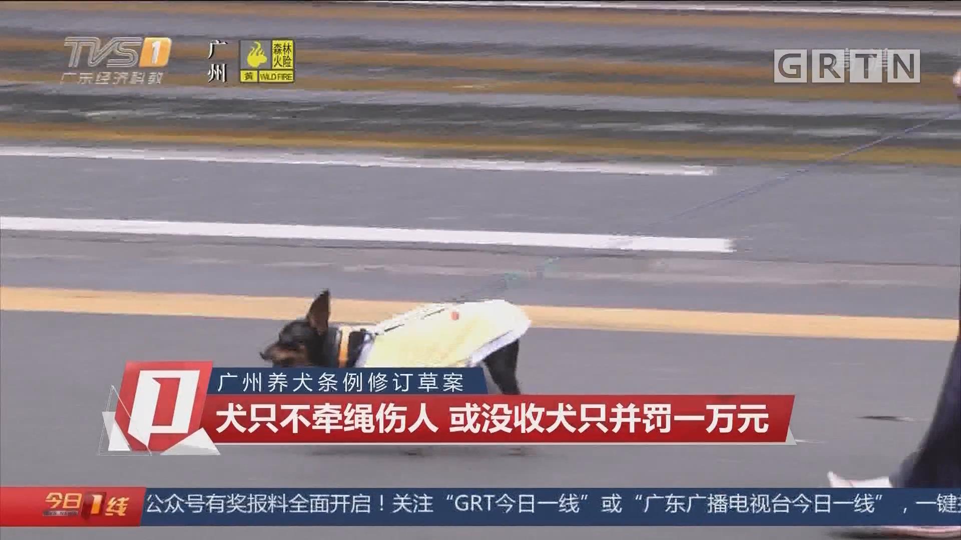 广州养犬条例修订草案 犬只不牵绳伤人 或没收犬只并罚一万元