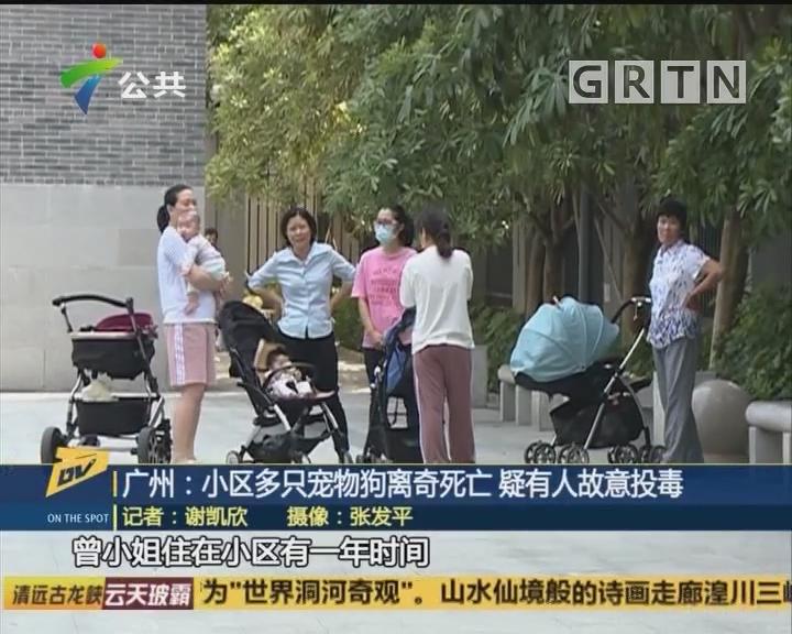 (DV现场)广州:小区多只宠物狗离奇死亡 疑有人故意投毒