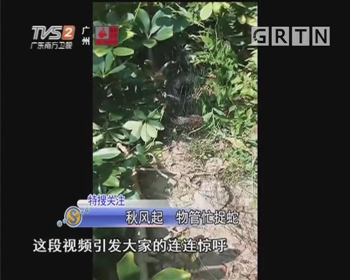 秋风起 物管忙捉蛇