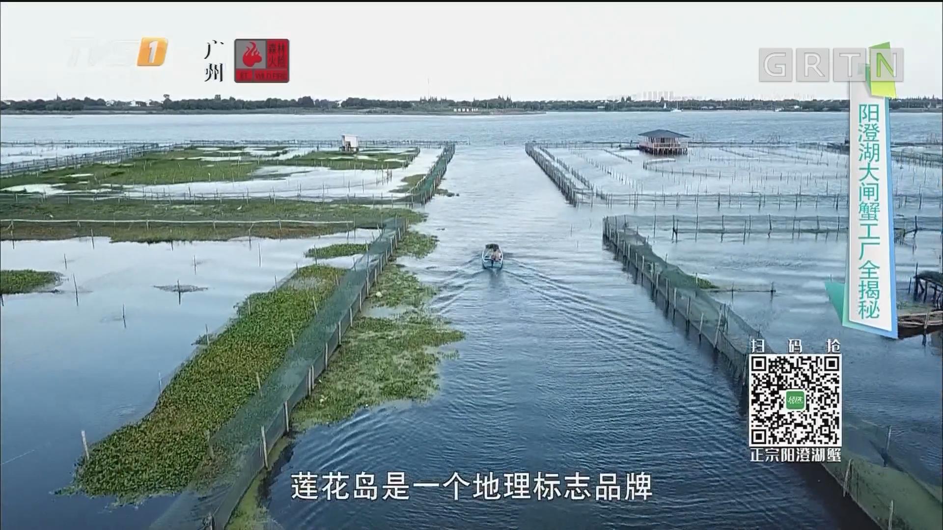 阳澄湖大闸蟹工厂全揭秘