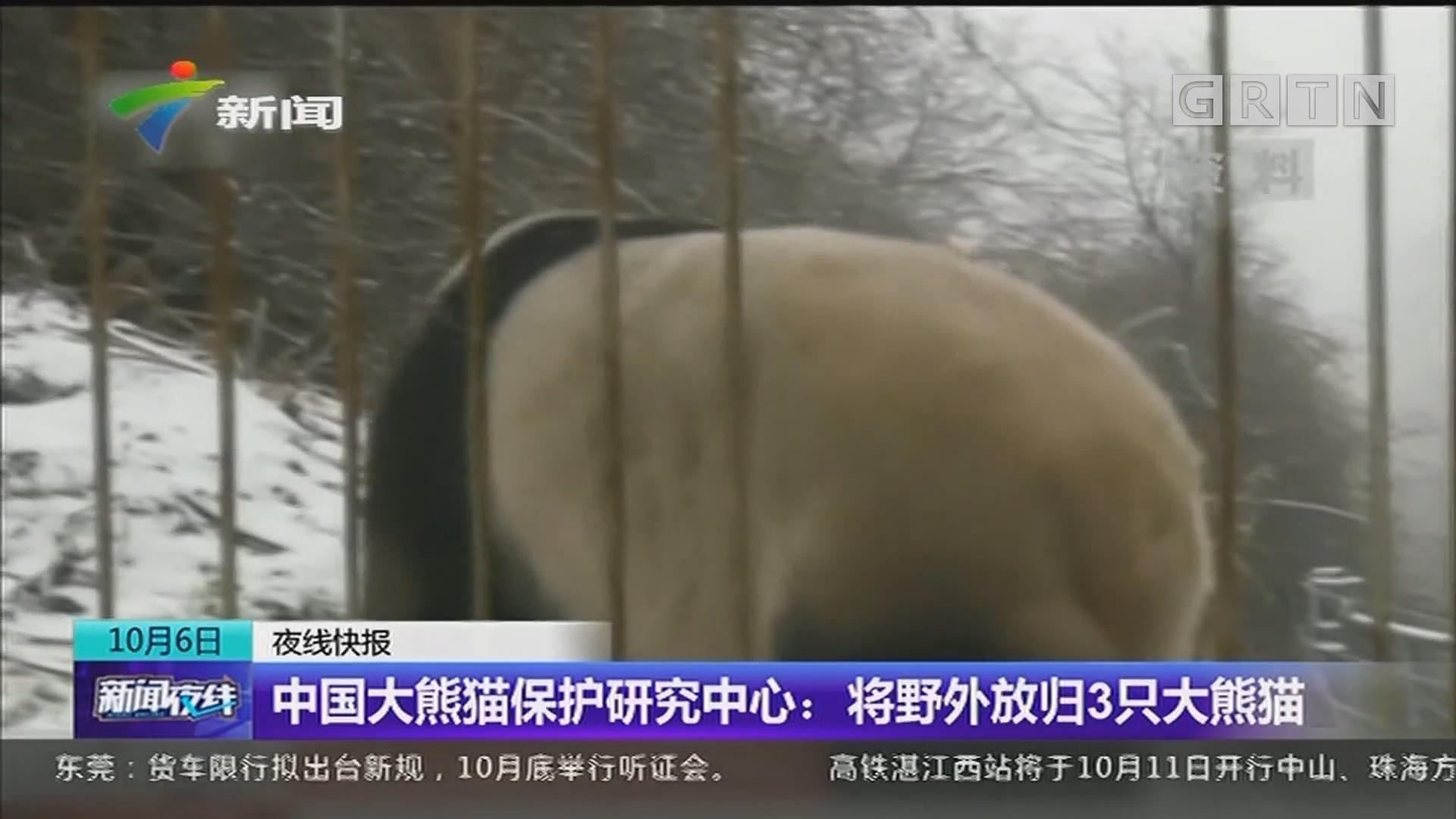 中国大熊猫保护研究中心:将野外放归3只大熊猫