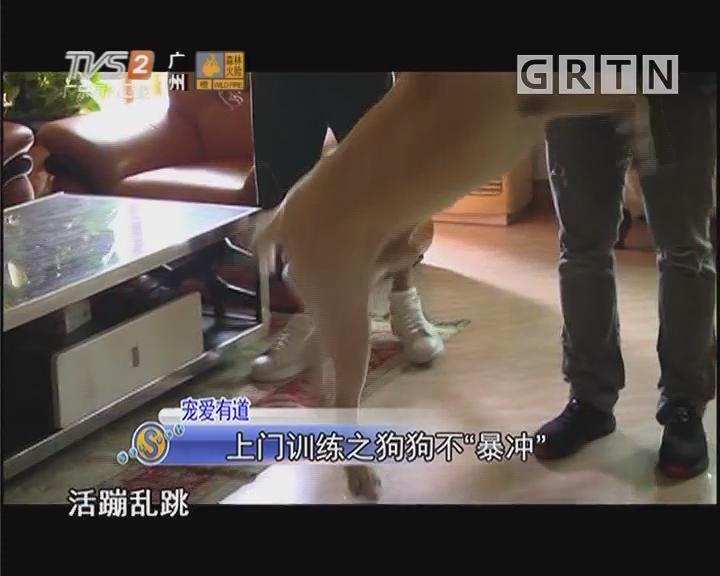 """宠爱有道 上门训练之狗狗不""""暴冲"""""""