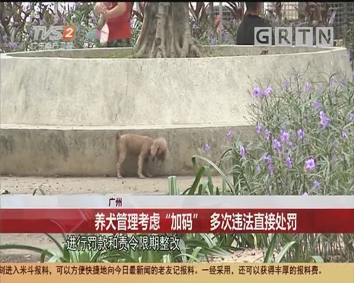 """广州:养犬管理考虑""""加码""""多次违法直接处罚"""