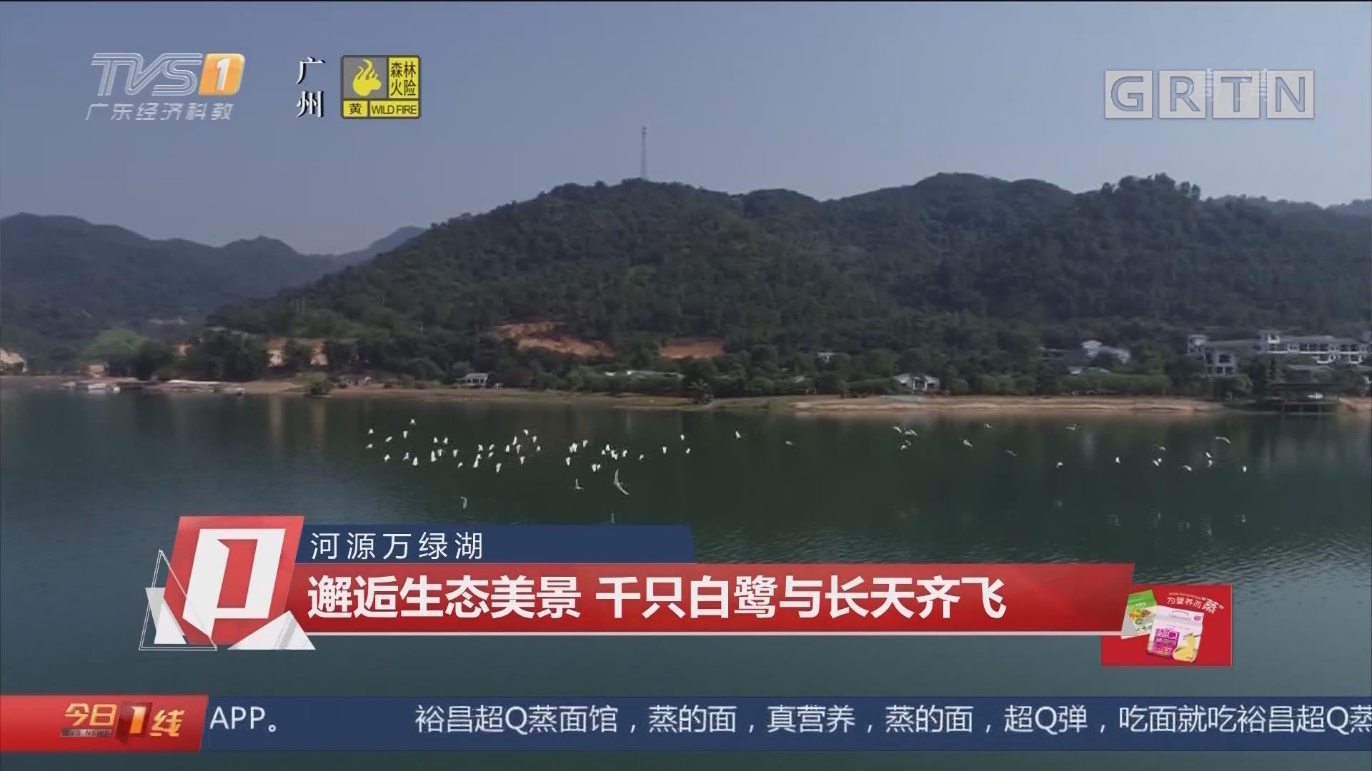 河源万绿湖 邂逅生态美景 千只白鹭与长天齐飞