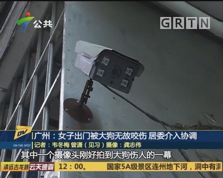 (DV现场)广州:女子出门被大狗无故咬伤 居委介入协调