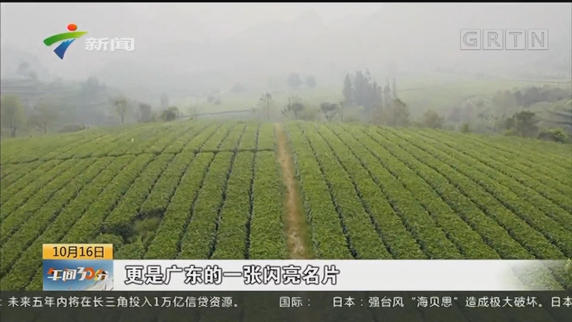 发现广东:一片叶子 一方产业