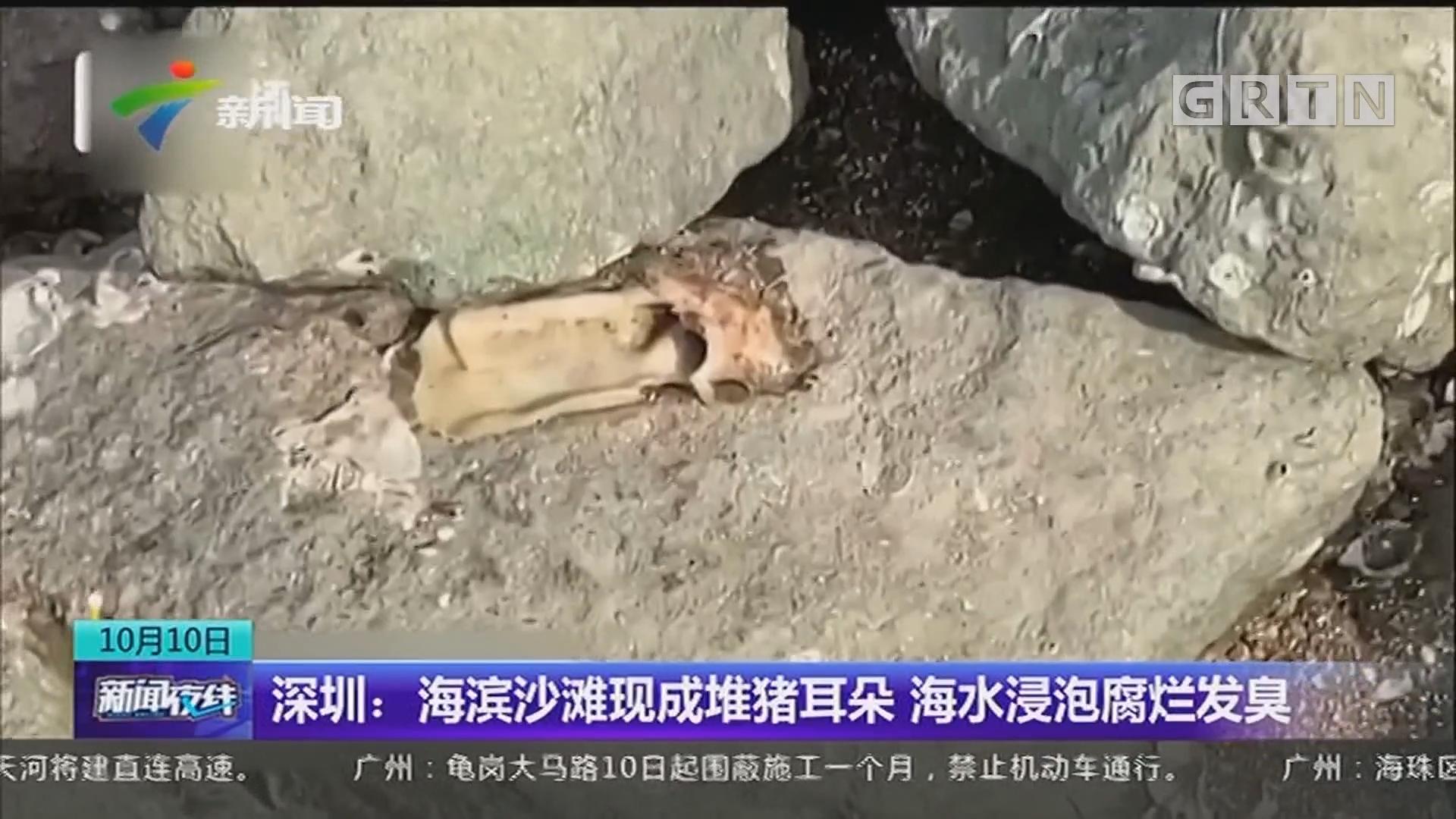 深圳:海滨沙滩现成堆猪耳朵 海水浸泡腐烂发臭
