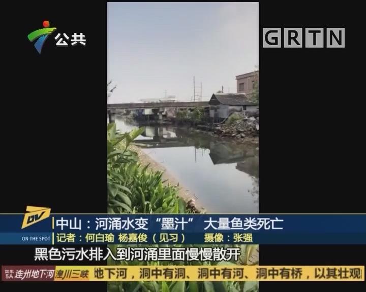 "(DV现场)中山:河涌水变""墨汁"" 大量鱼类死亡"
