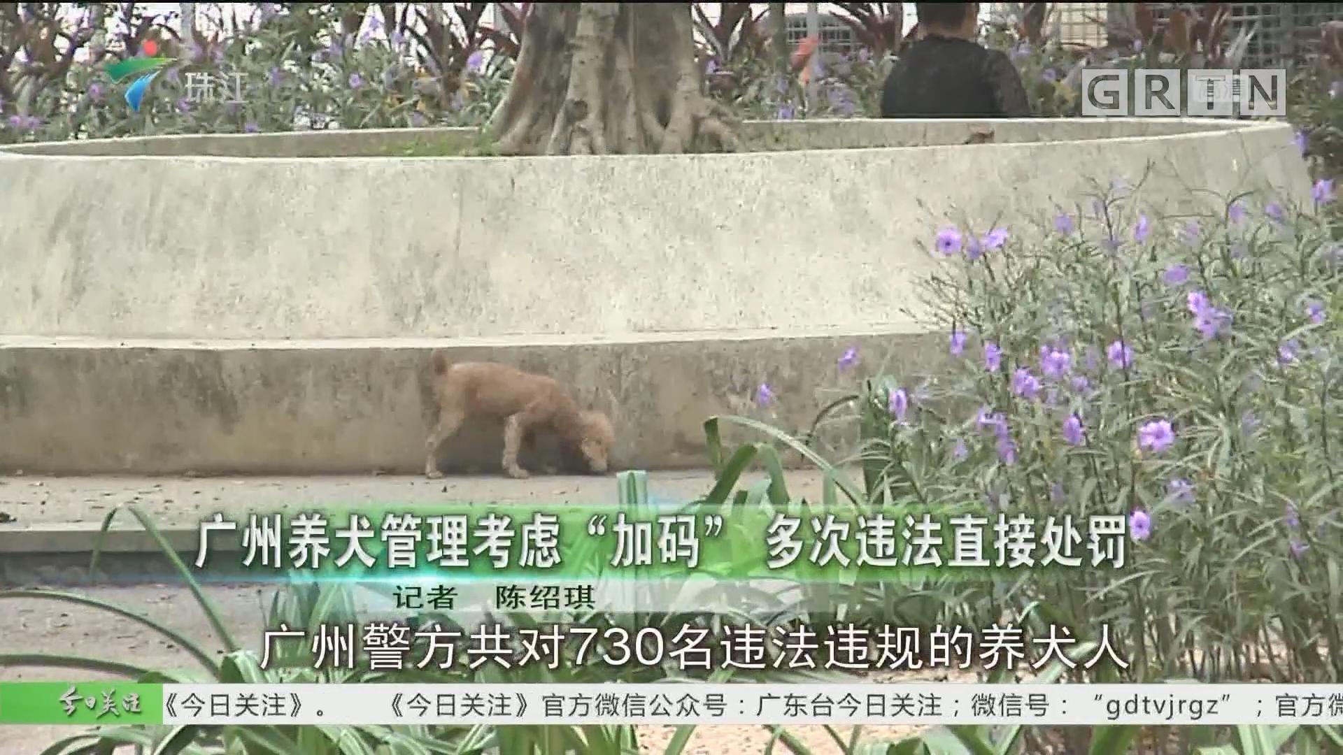 """廣州養犬管理考慮""""加碼"""" 多次違法直接處罰"""