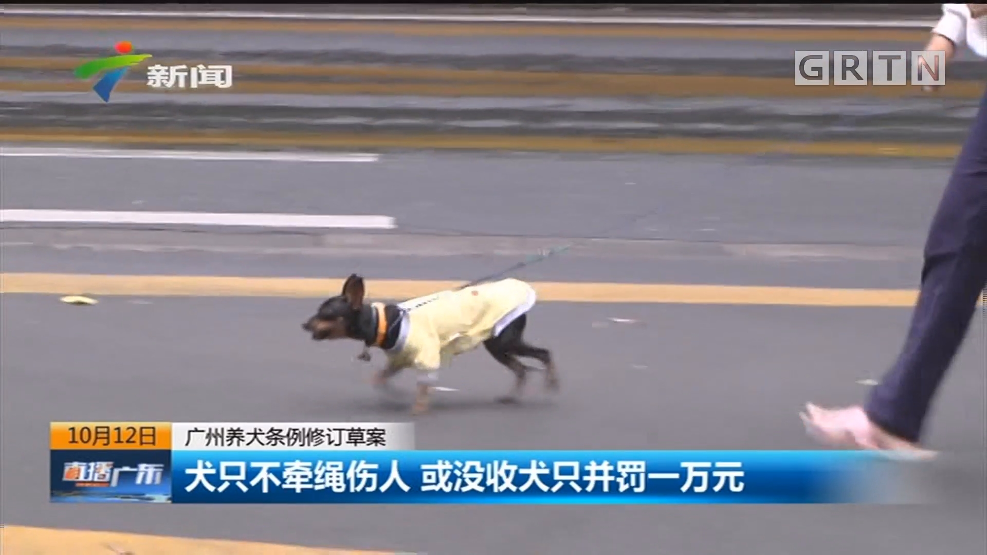 广州养犬条例修订草案:犬只不牵绳伤人 或没收犬只并罚一万元