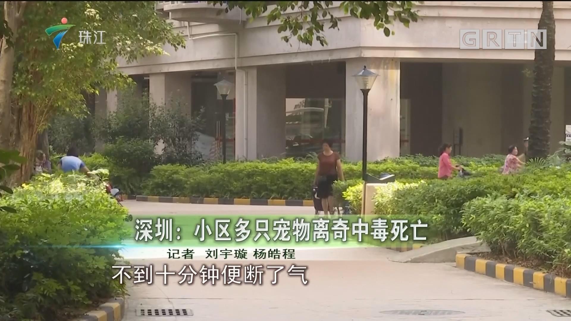 深圳:小區多只寵物離奇中毒死亡