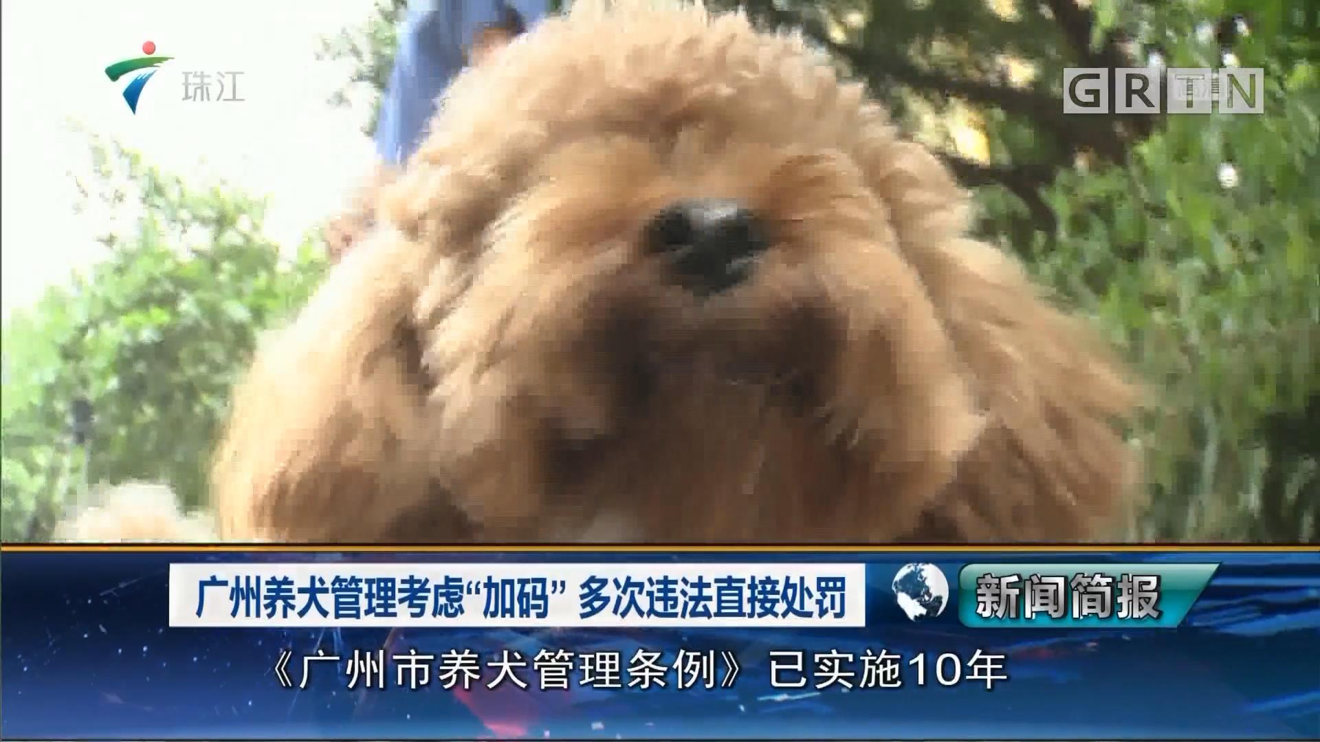 """广州养犬管理考虑""""加码"""" 多次违法直接处罚"""