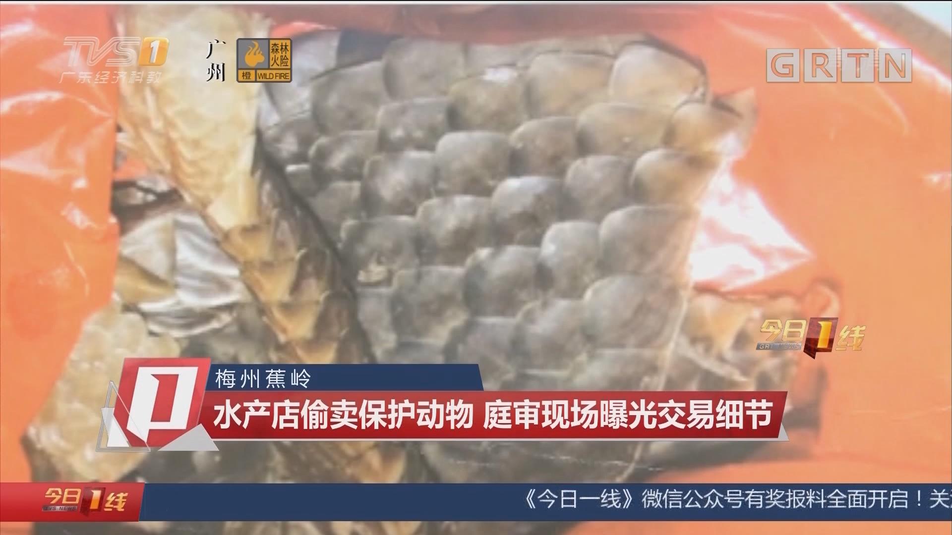 梅州蕉岭:水产店偷卖保护动物 庭审现场曝光交易细节