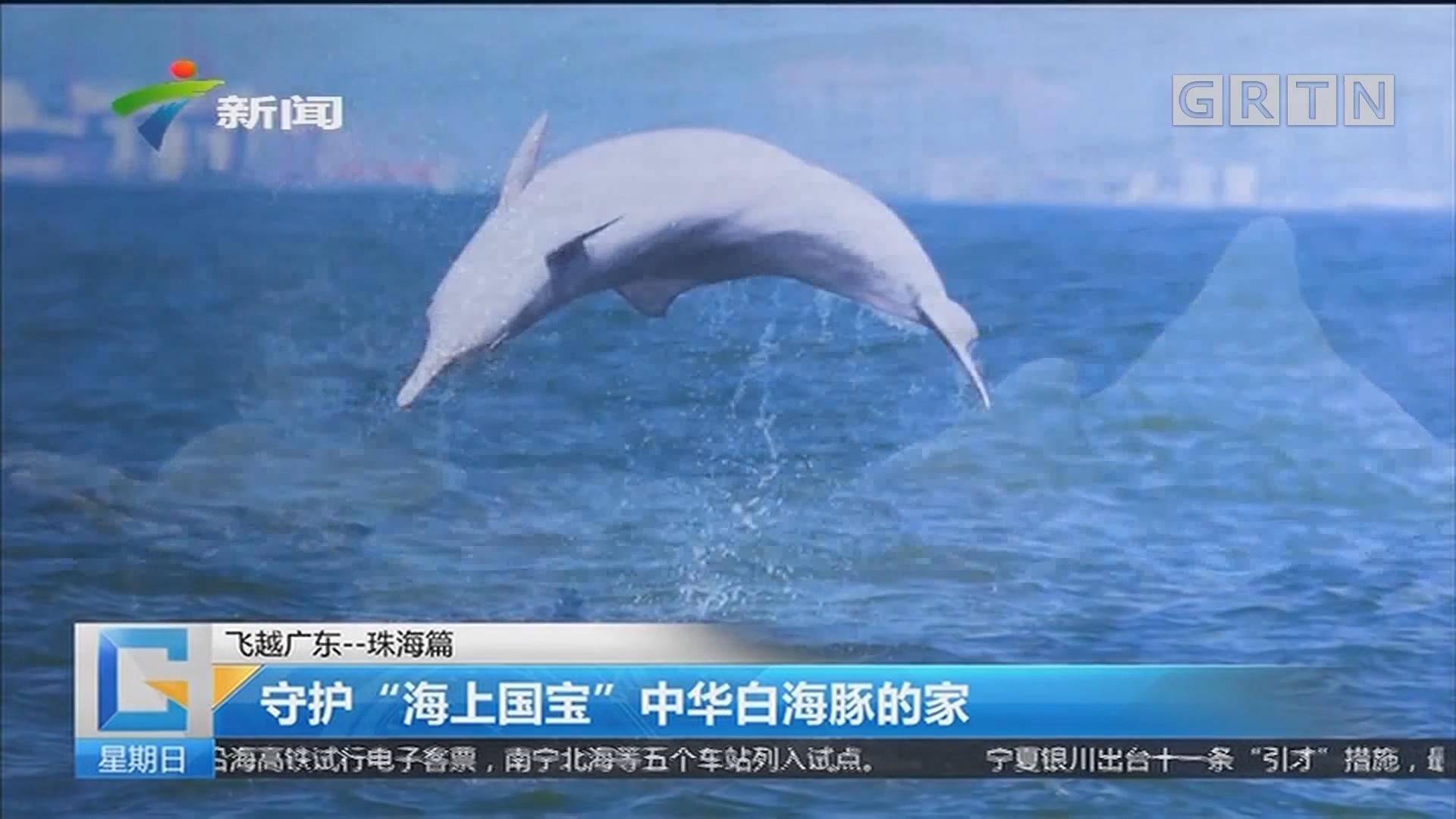 """飞越manbetx手机版 - 登陆——珠海篇 守护""""海上国宝""""中华白海豚的家"""