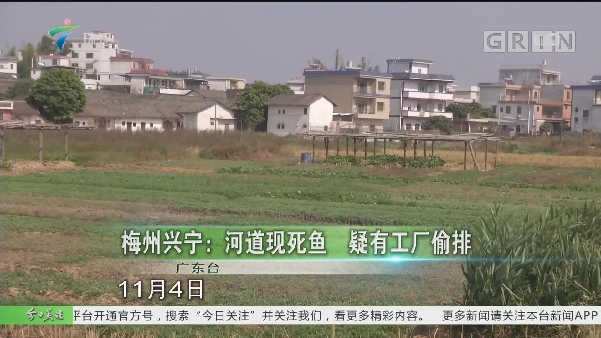 梅州兴宁:河道现死鱼 疑有工厂偷排