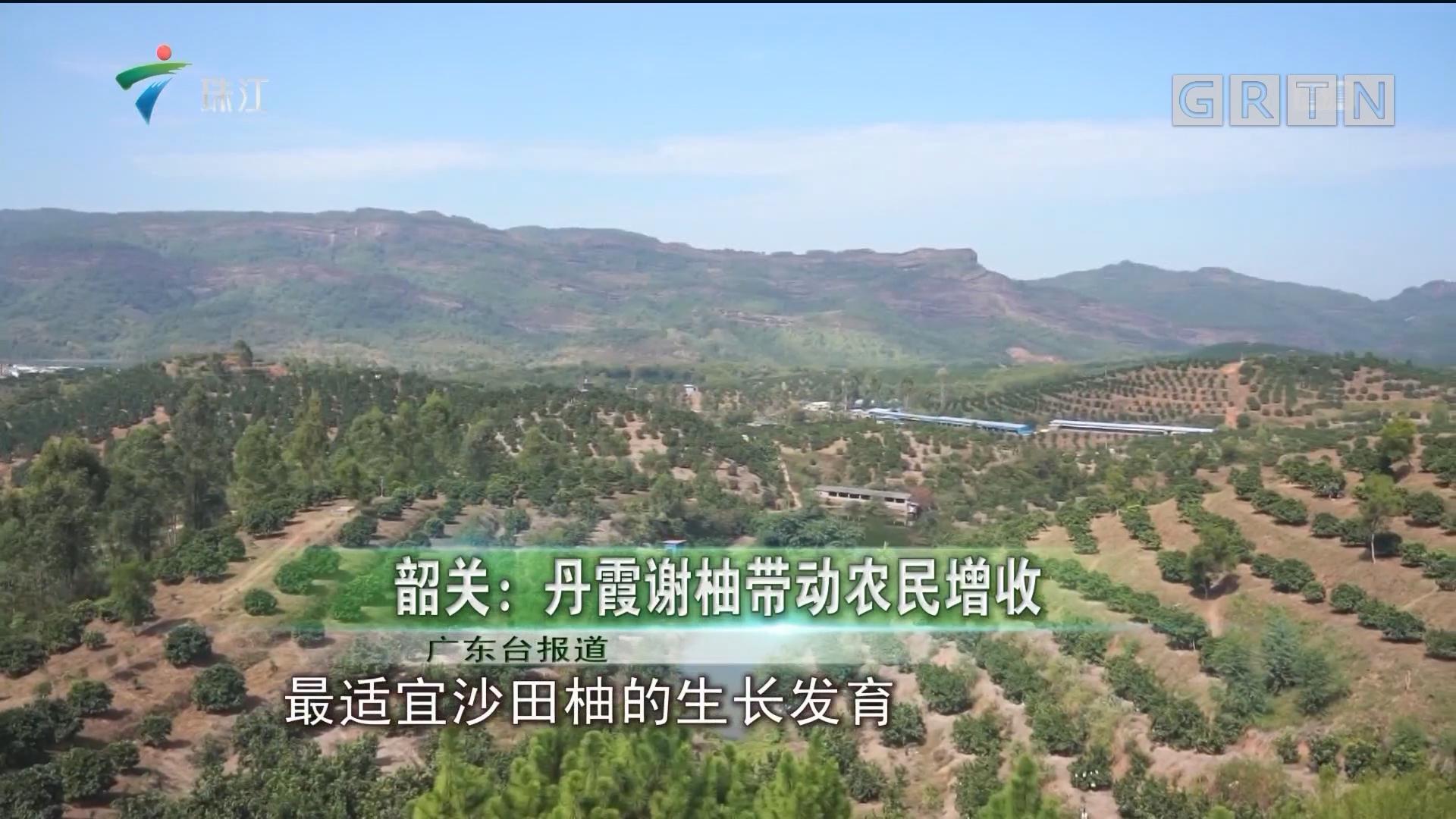 韶关:丹霞谢柚带动农民增收