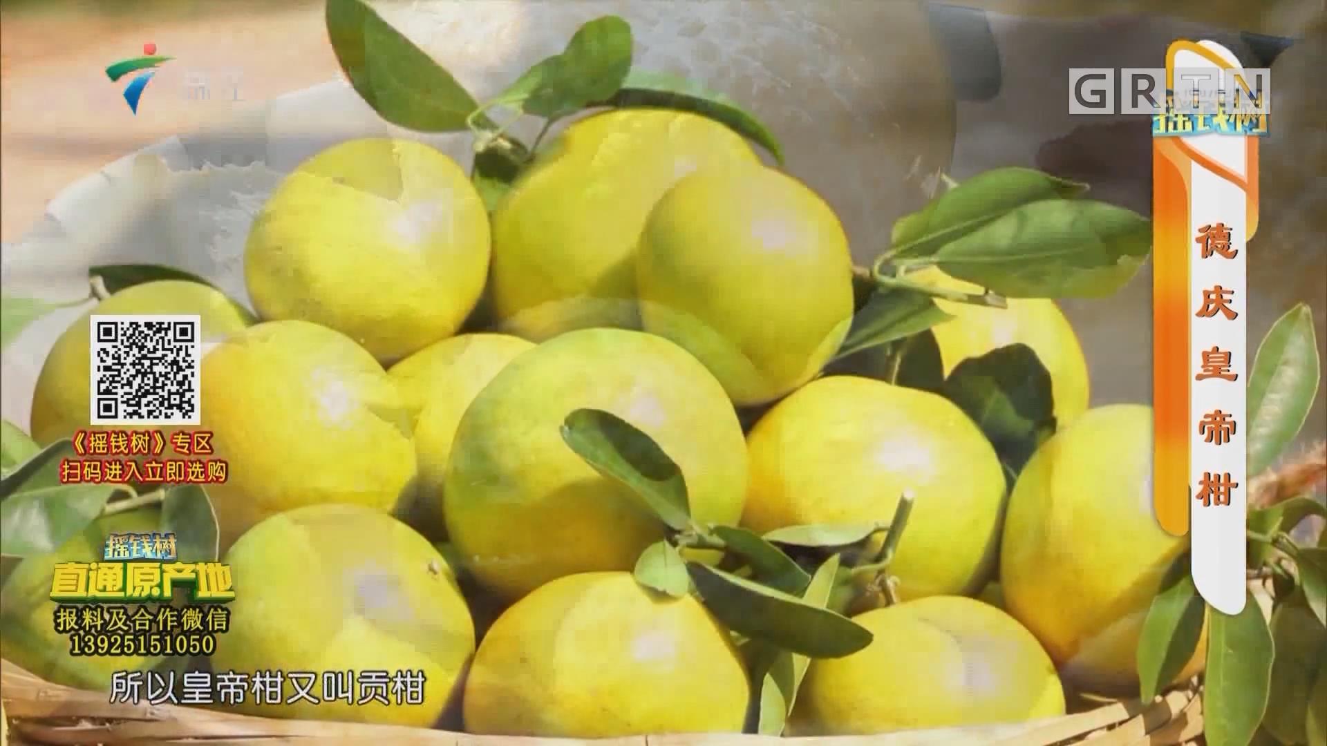 [HD][2019-11-25]摇钱树:德庆皇帝柑