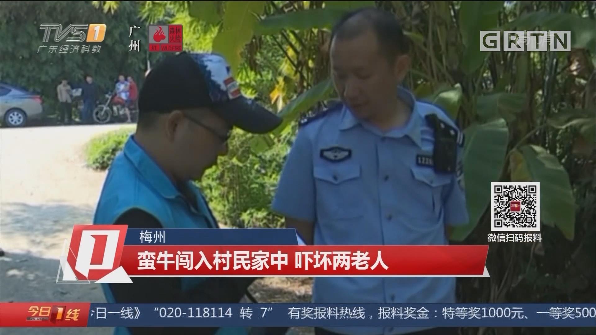 梅州:蛮牛闯入村民家中 吓坏两老人