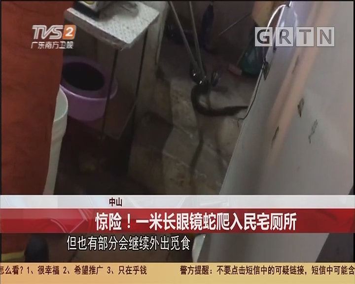 中山 惊险!一米长眼镜蛇爬入民宅厕所