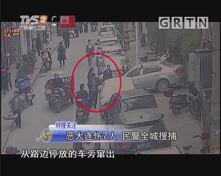 恶犬连伤7人 民警全城搜捕