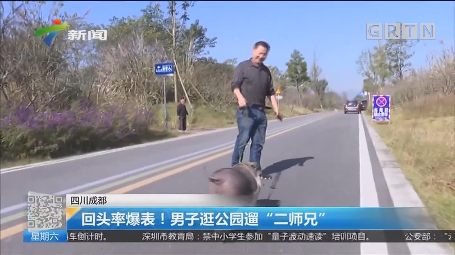 """四川成都:回头率爆表!男子逛公园遛""""二师兄"""""""