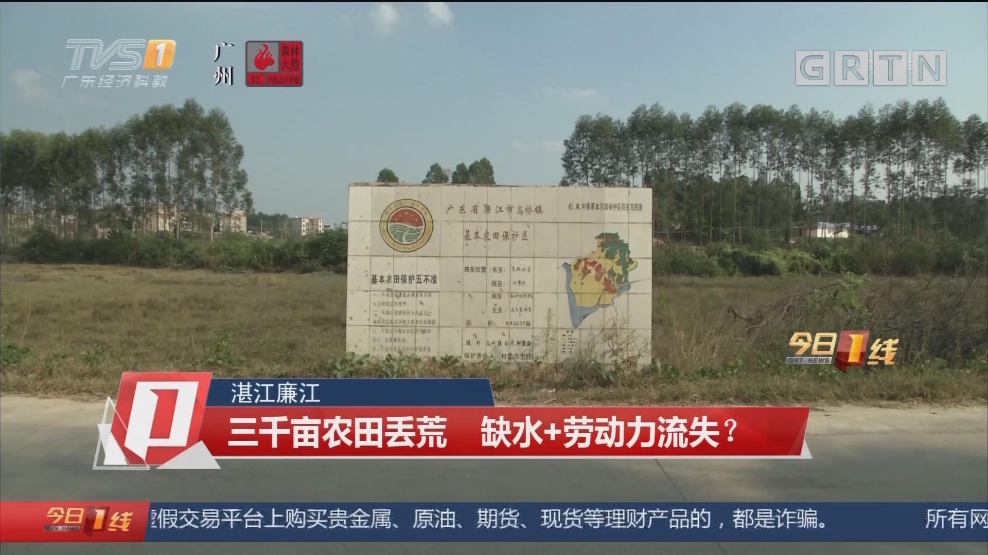 湛江廉江:三千亩农田丢荒 缺水+劳动力流失?