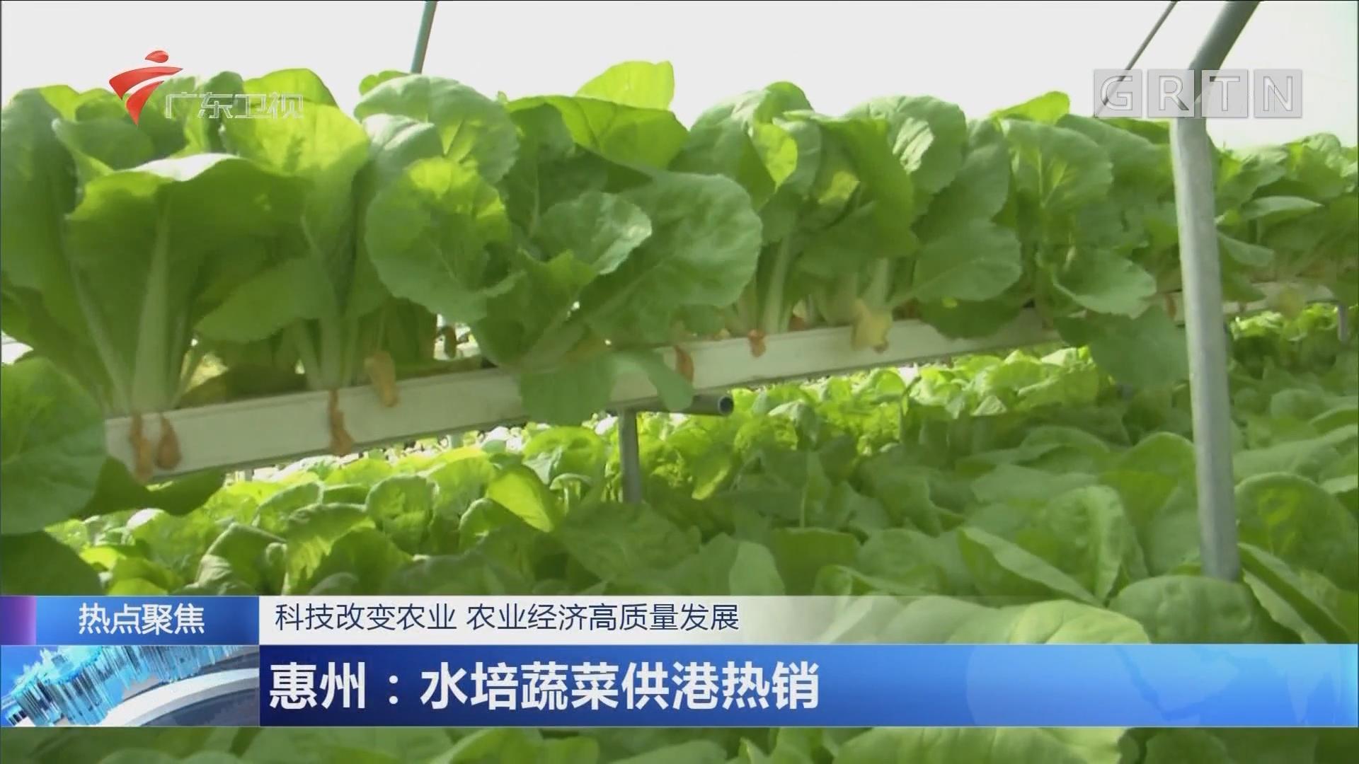 科技改变农业 农业经济高质量发展 惠州:水培蔬菜供港热销