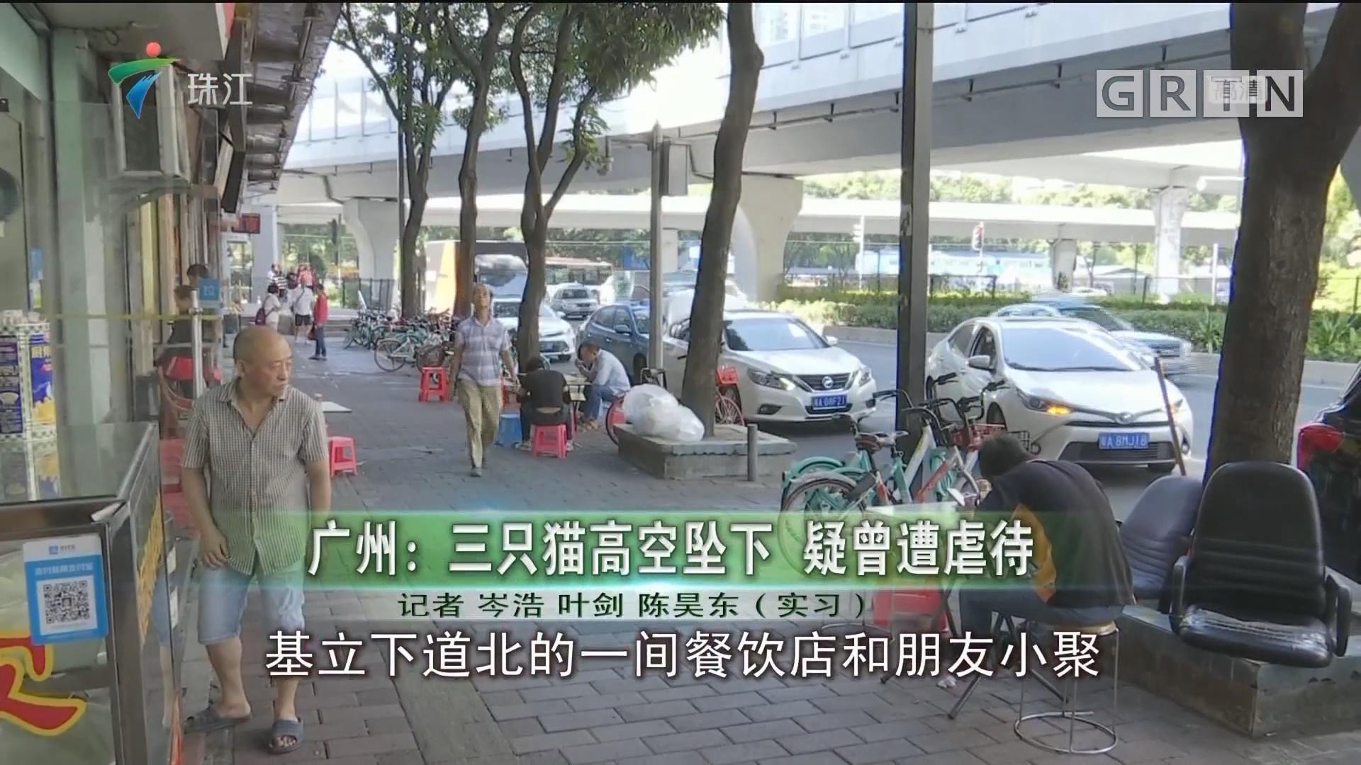 广州:三只猫高空坠下 疑曾遭虐待