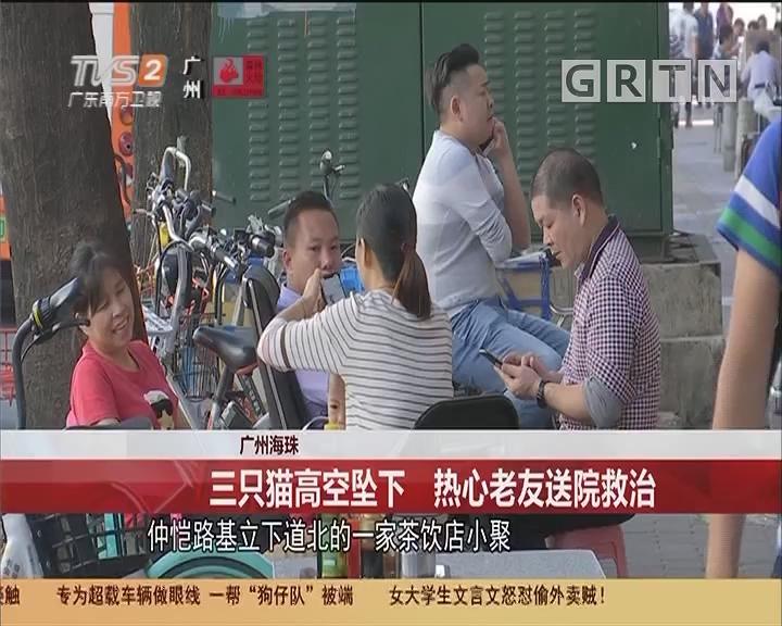 广州海珠:三只猫高空坠下 热心老友送院救治