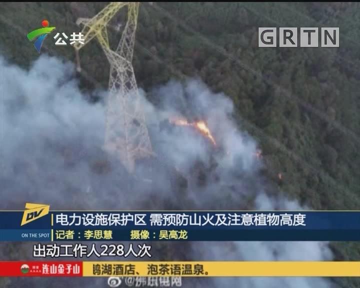 (DV现场)电力设施保护区 需预防山火及注意植物高度