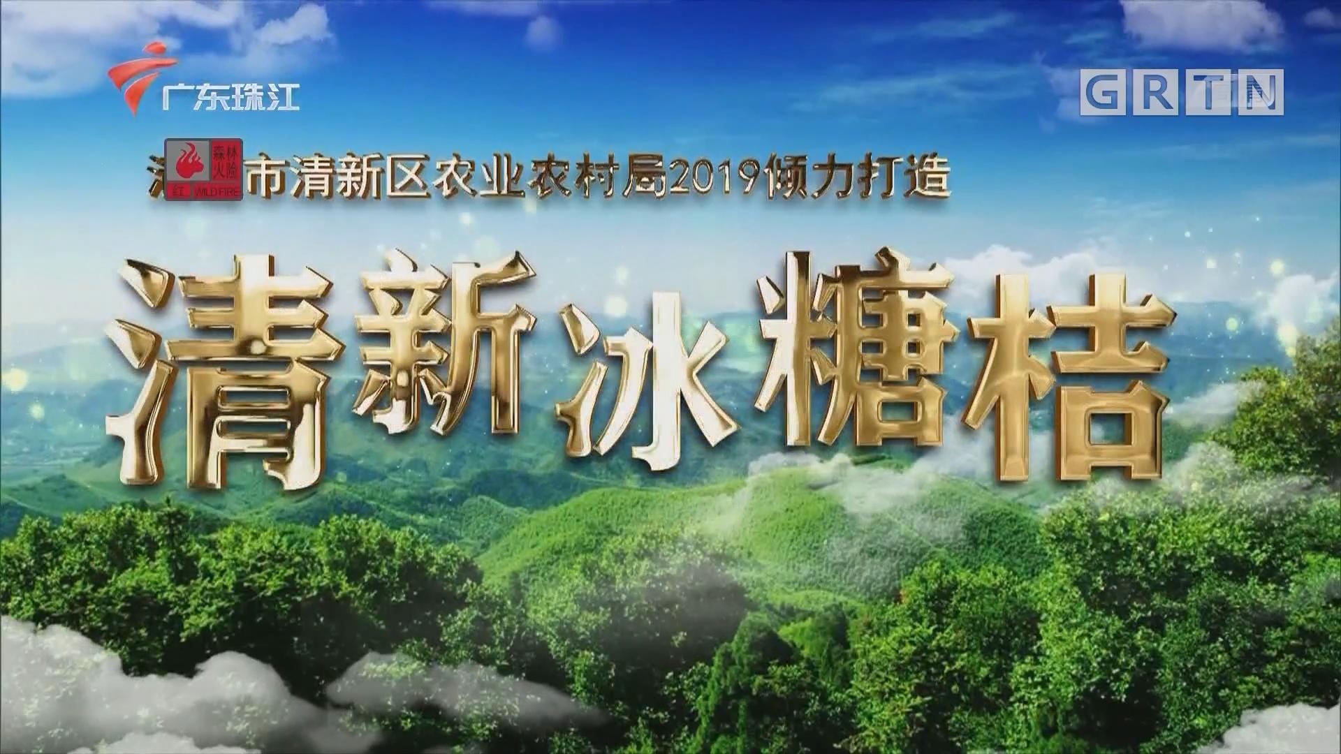 [HD][2019-12-23]摇钱树:清新冰糖桔