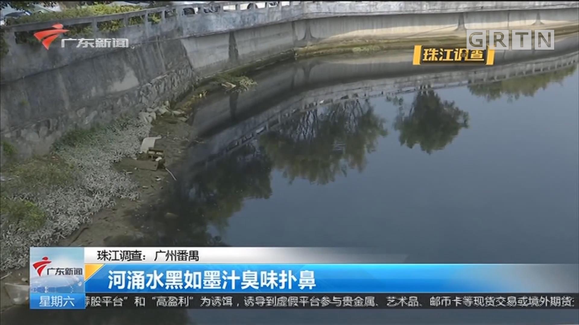 珠江调查:广州番禺 河涌水黑如墨汁臭味扑鼻
