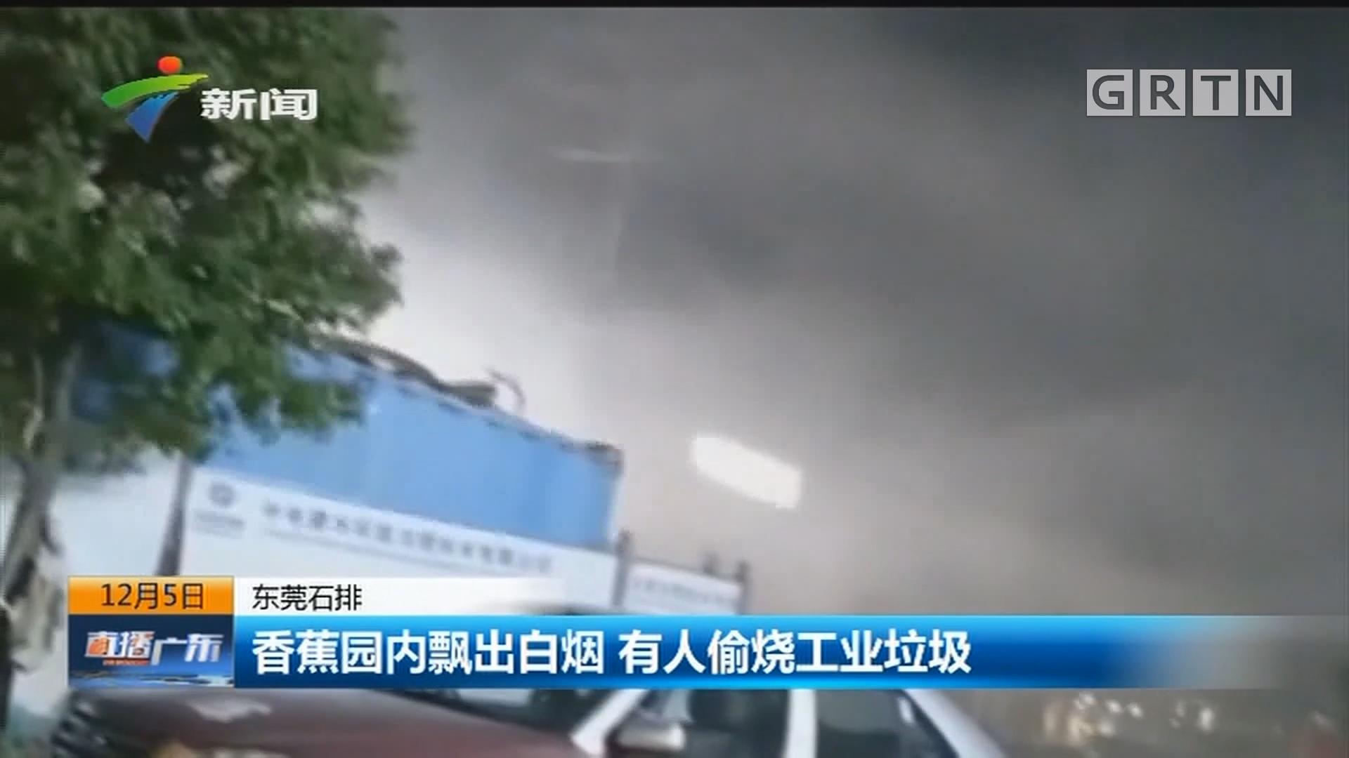 东莞石排:香蕉园内飘出白烟 有人偷烧工业垃圾