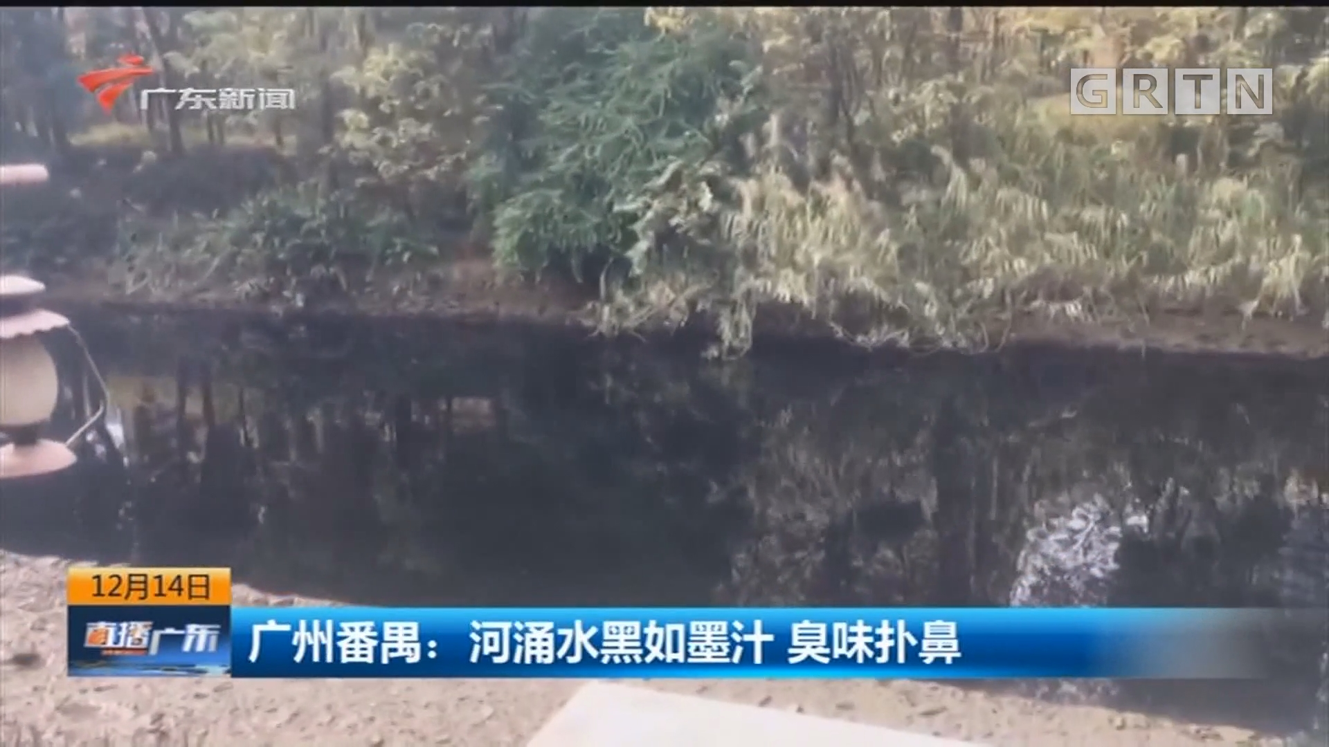 广州番禺:河涌水黑如墨汁 臭味扑鼻