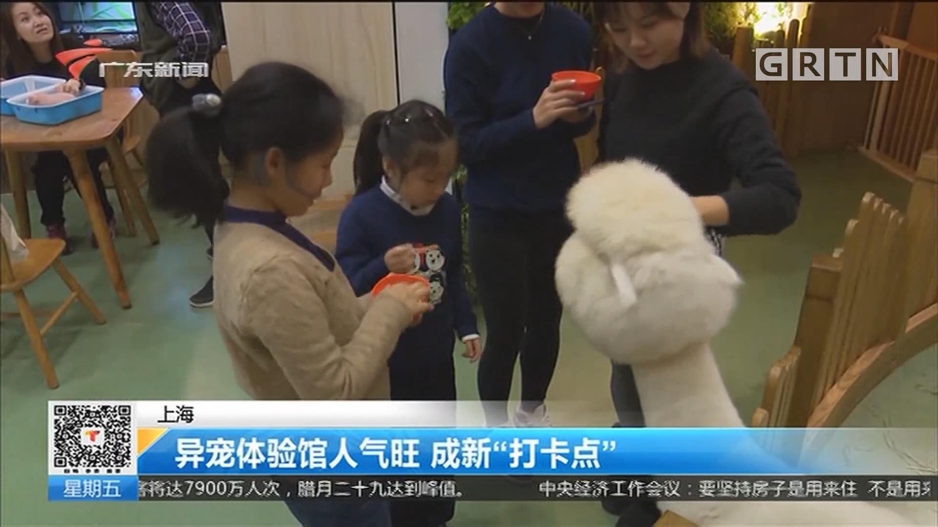 """上海:异宠体验馆人气旺 成新""""打卡点"""""""