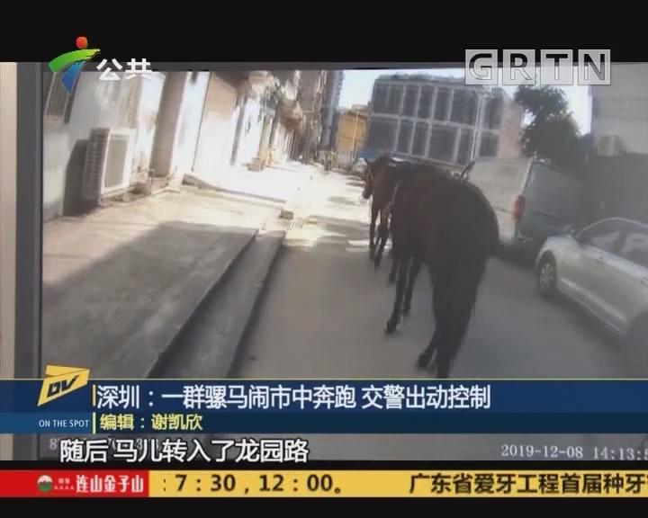 (DV现场)深圳:一群骡马闹市中奔跑 交警出动控制