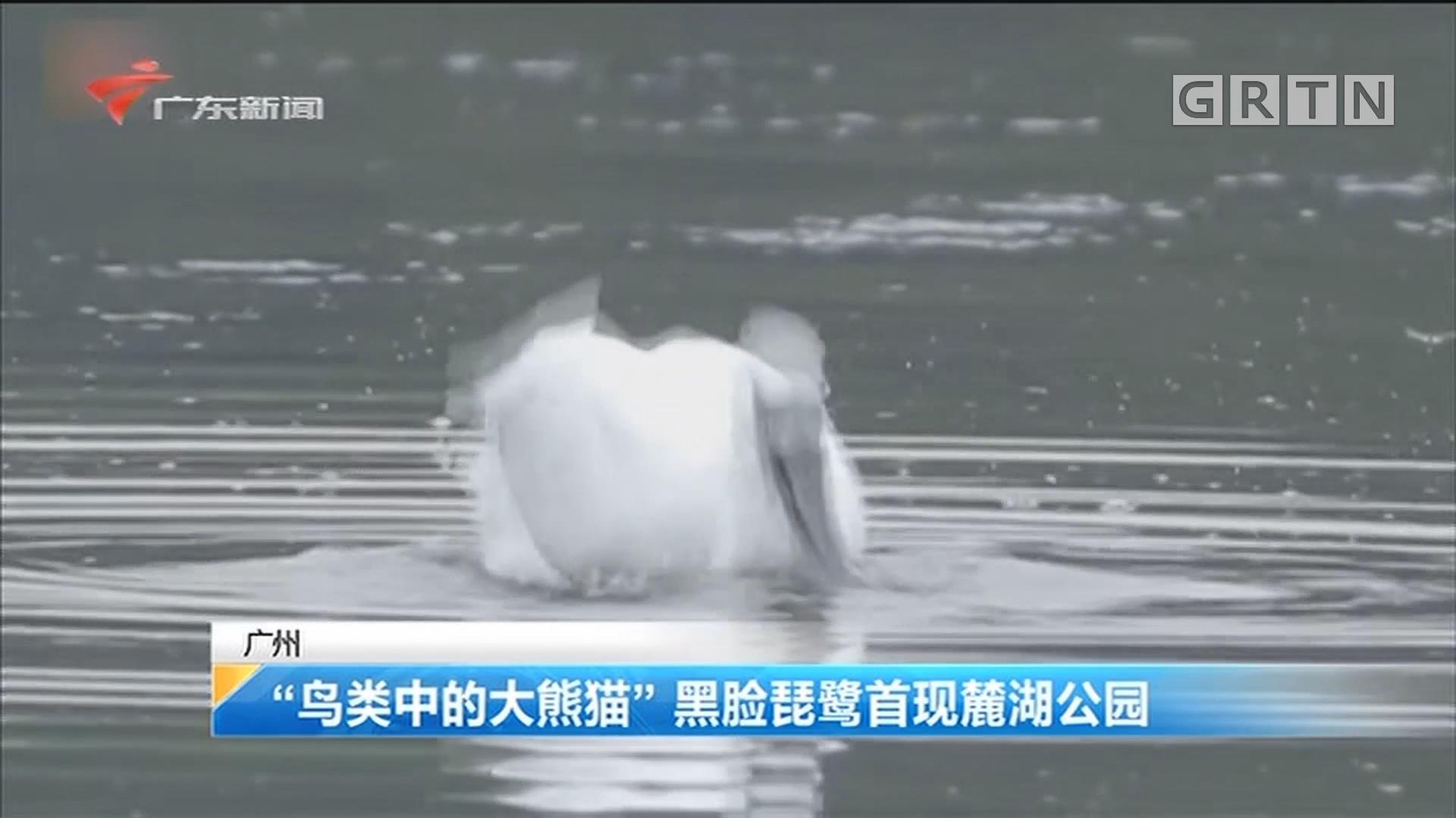 """广州 """"鸟类中的大熊猫""""黑脸琵鹭首现麓湖公园"""