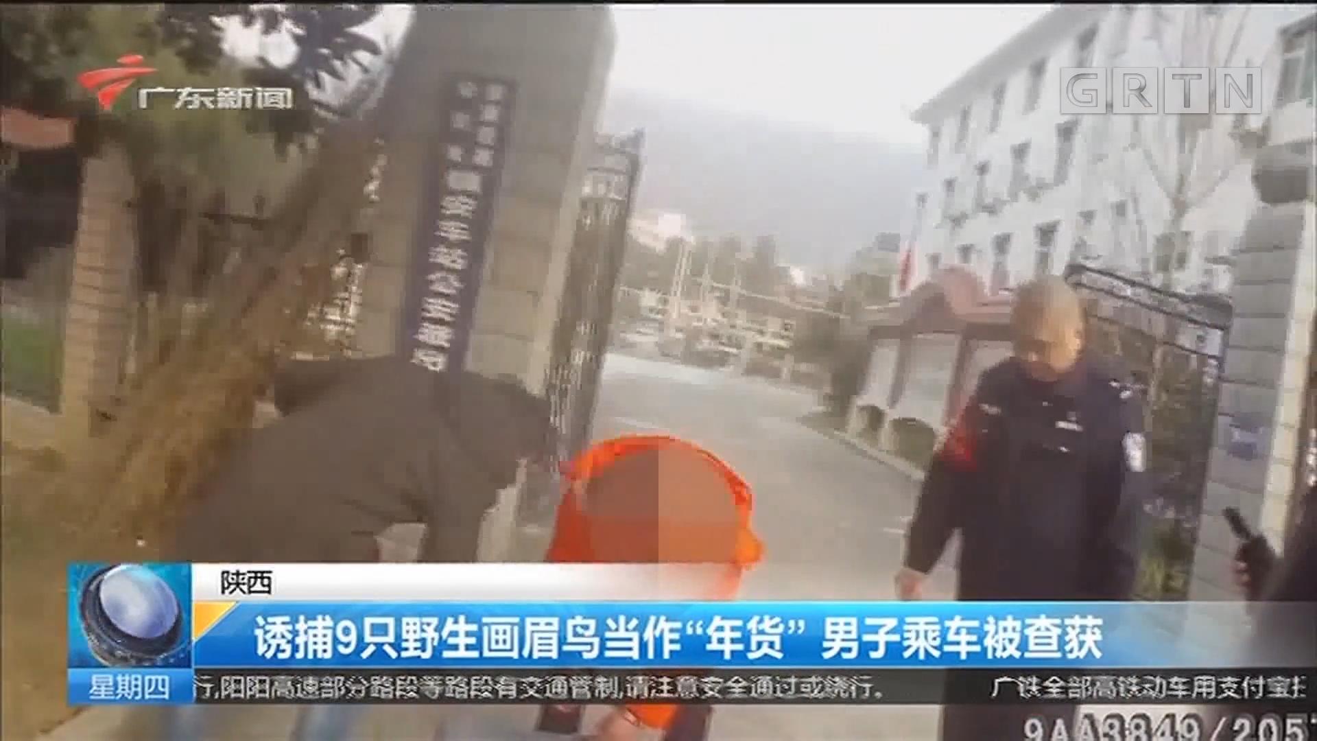 """陕西:诱捕9只野生画眉鸟当作""""年货"""" 男子乘车被查获"""